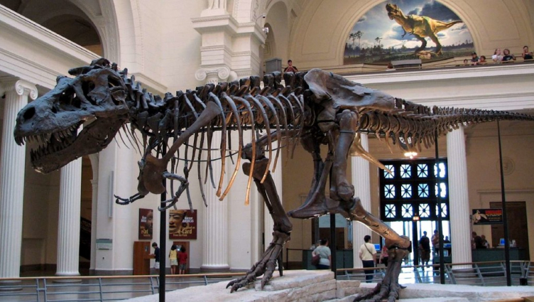 Dinosaur in Chicago Museum