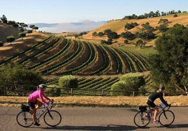 cycling in vineyards