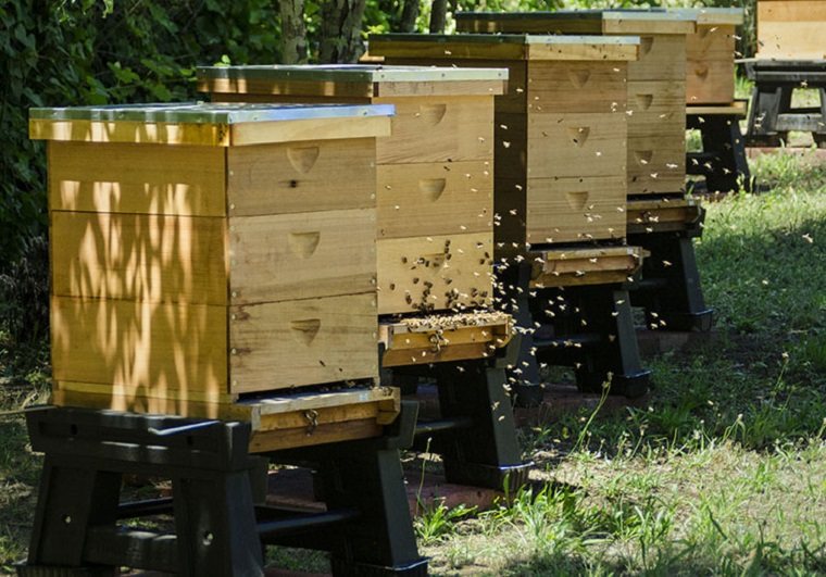 3-Applewood-Inn-Apiary_-_Nature