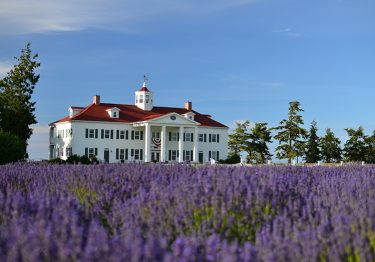 George Washington Inn Exterior Lavender Field