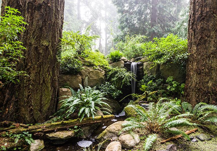 Domaine Garden Ferns