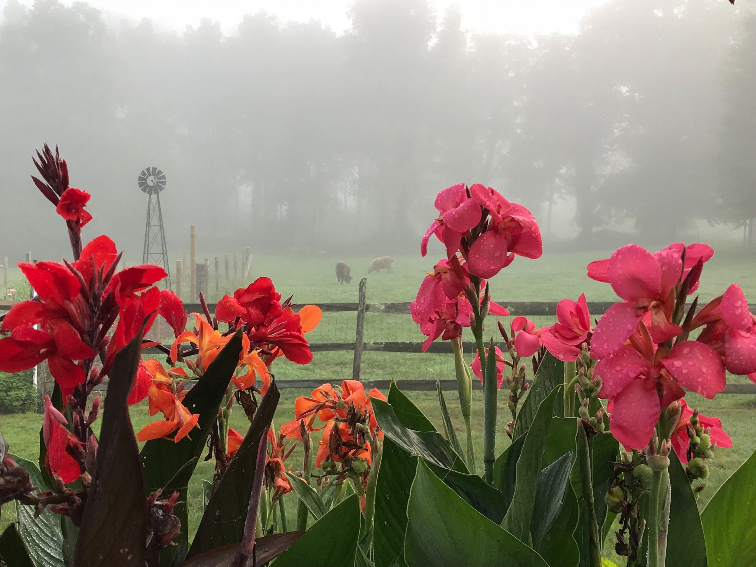 woolverton-flowers