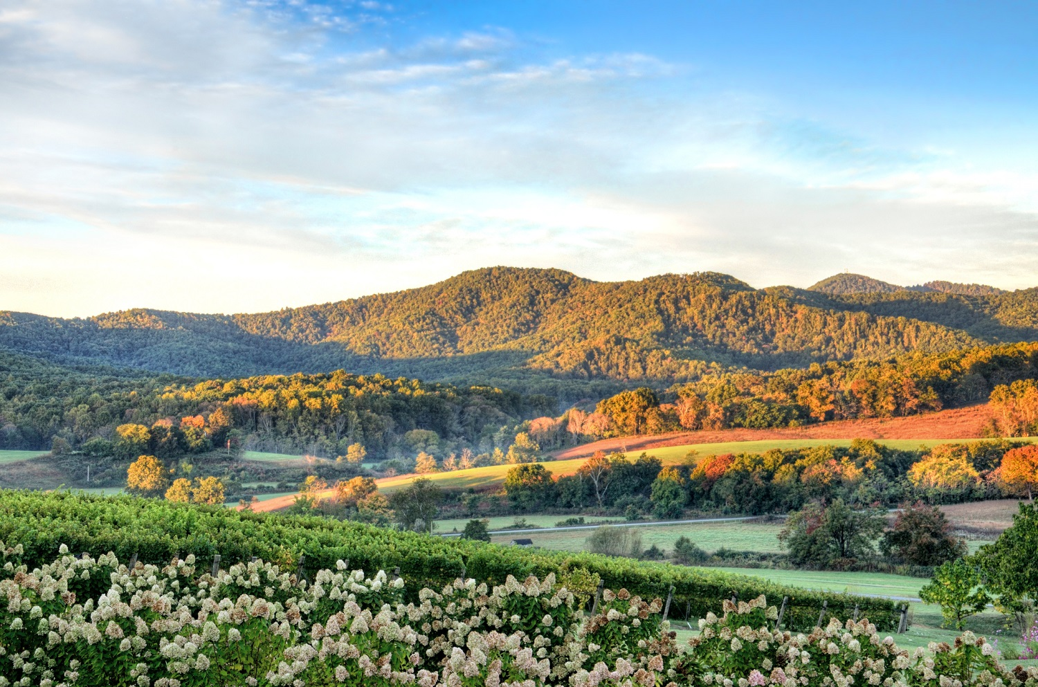 best bed and breakfast virginia mountains