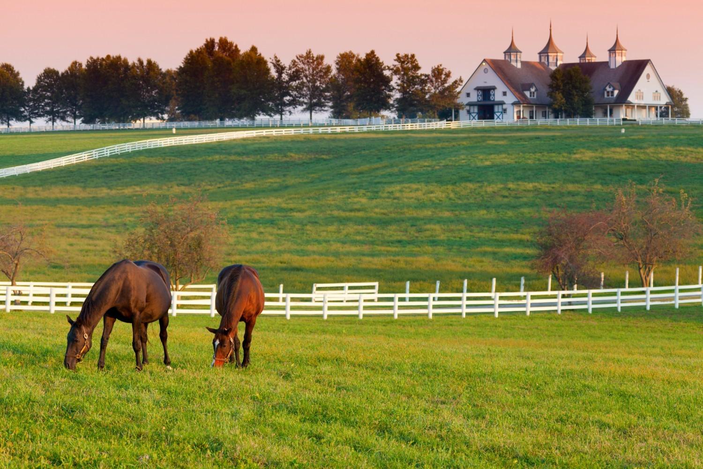 farm near Versailles KY