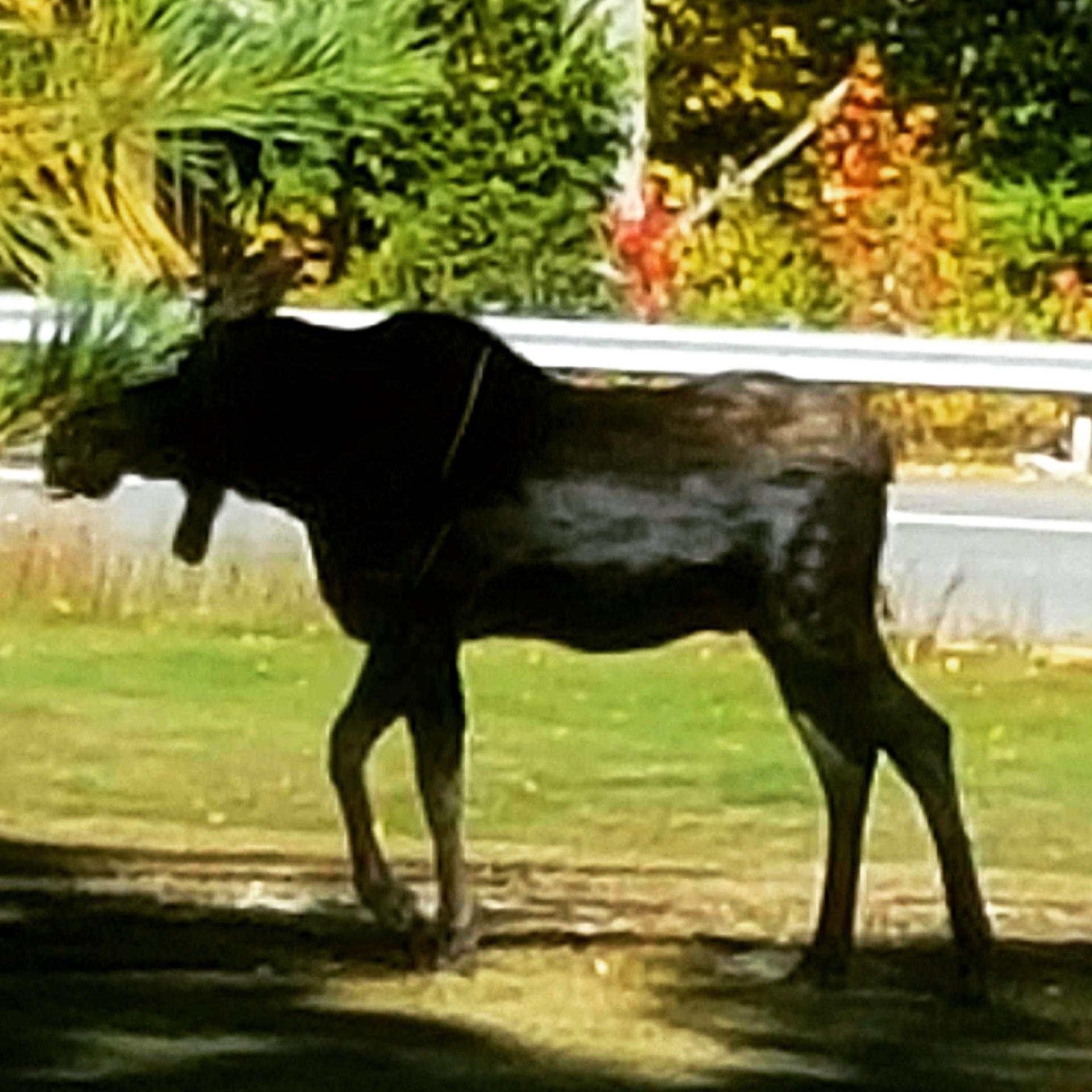 moose visitor adjusted