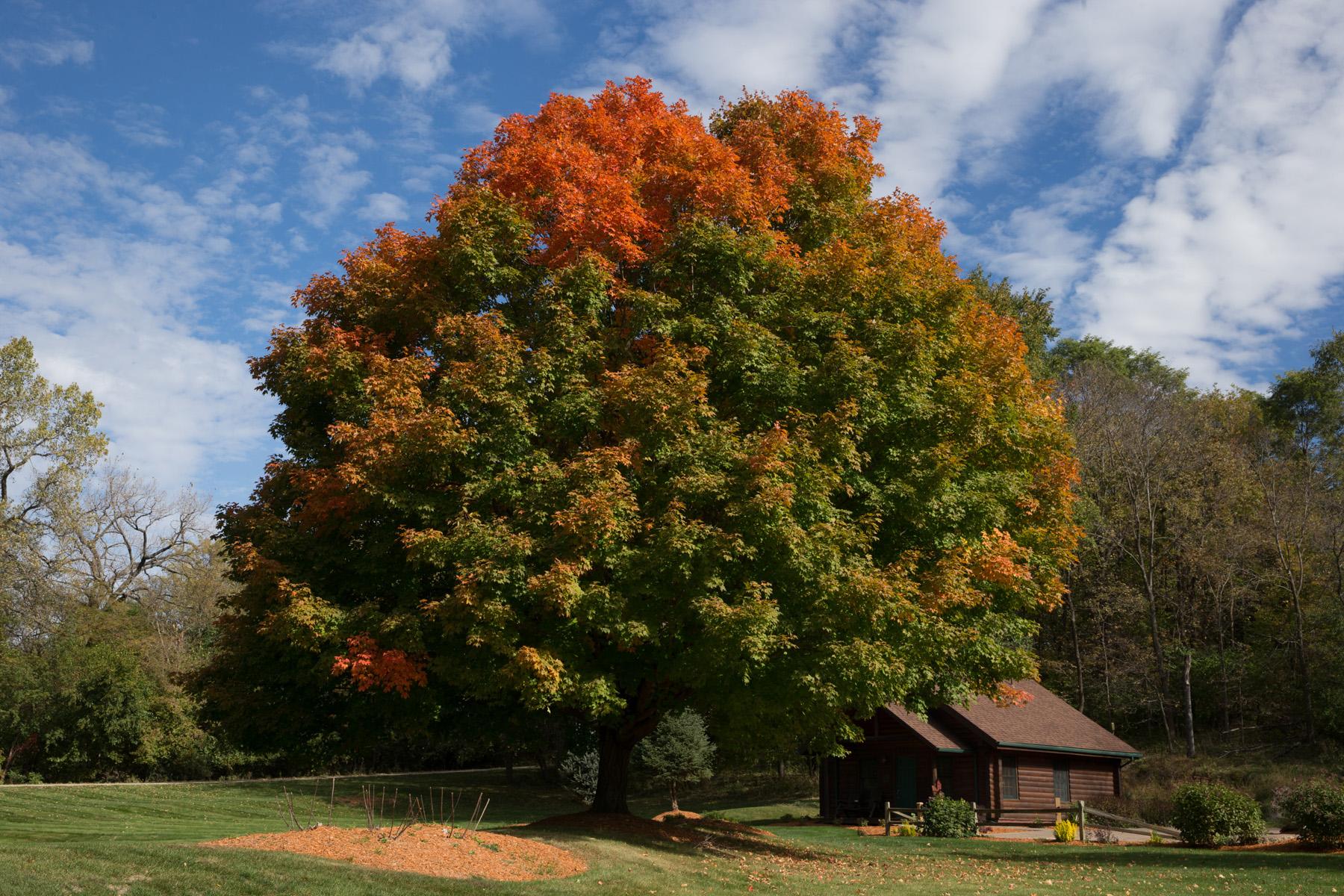 Tree by cabins - Birgit Radin