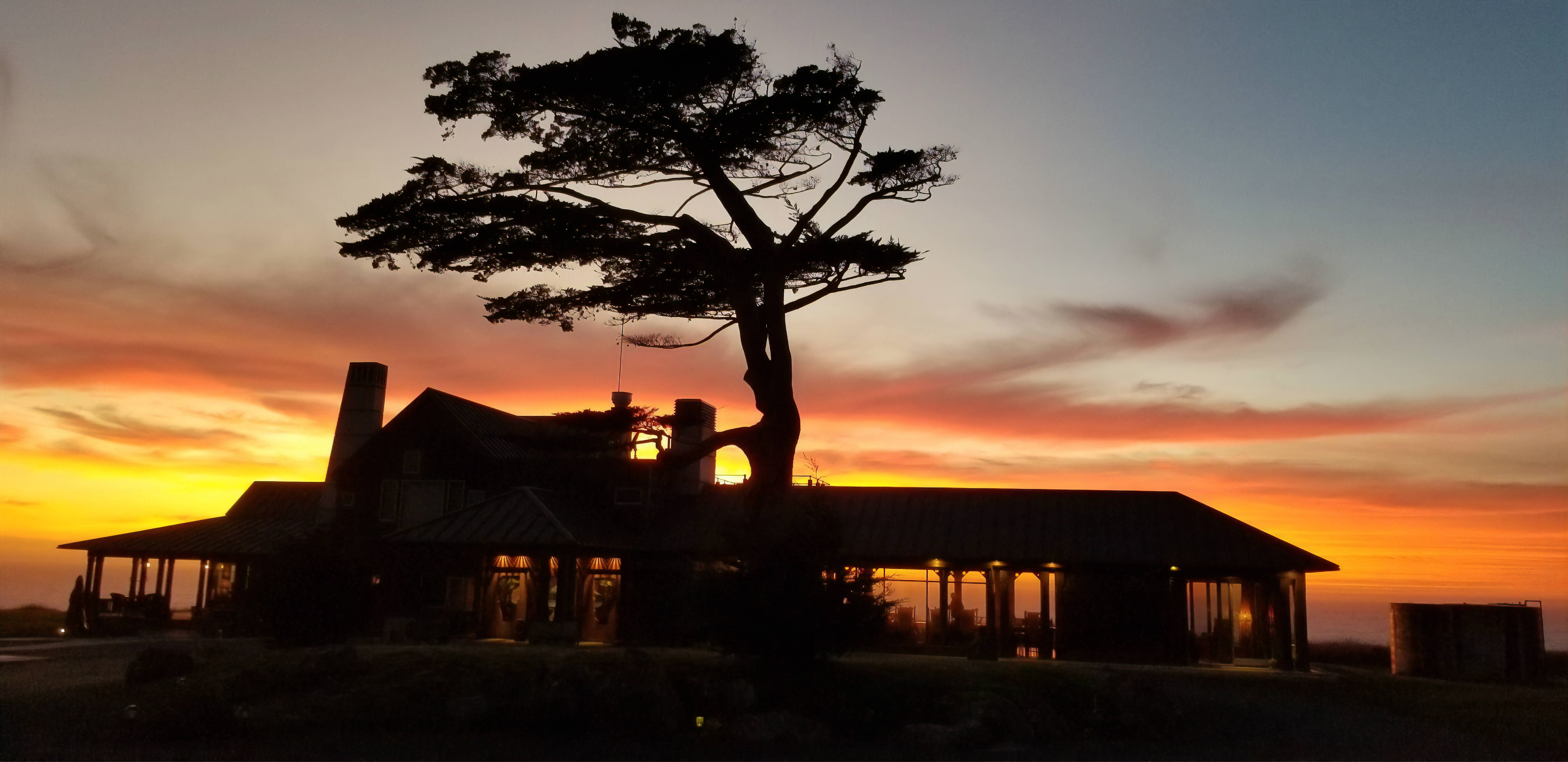 Tree at Twilight Inn at Newport Ranch