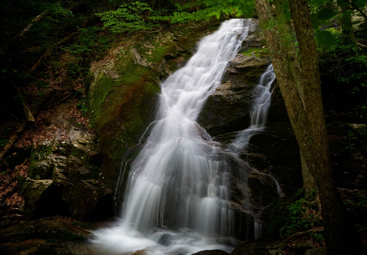 nearby crab tree falls