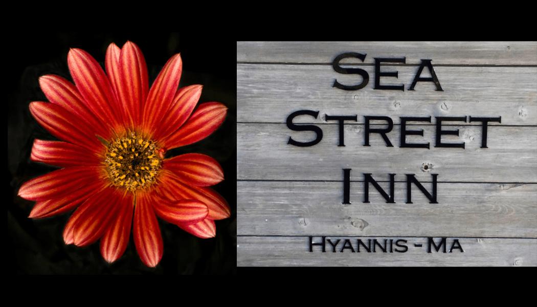Sea Street Inn Logo - Xenia D'Ambrosi