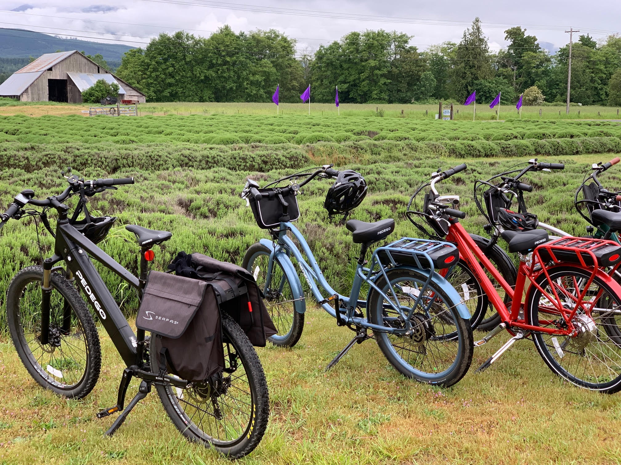 EBike Tour of Lavender Farms