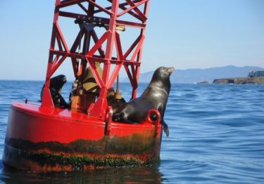 seals on a red buoy